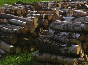 palivo-stromy-2