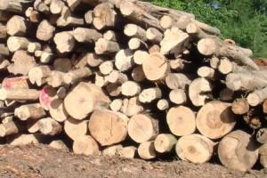 palivo-stromy